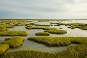 Building with Nature in Galveston Bay 1