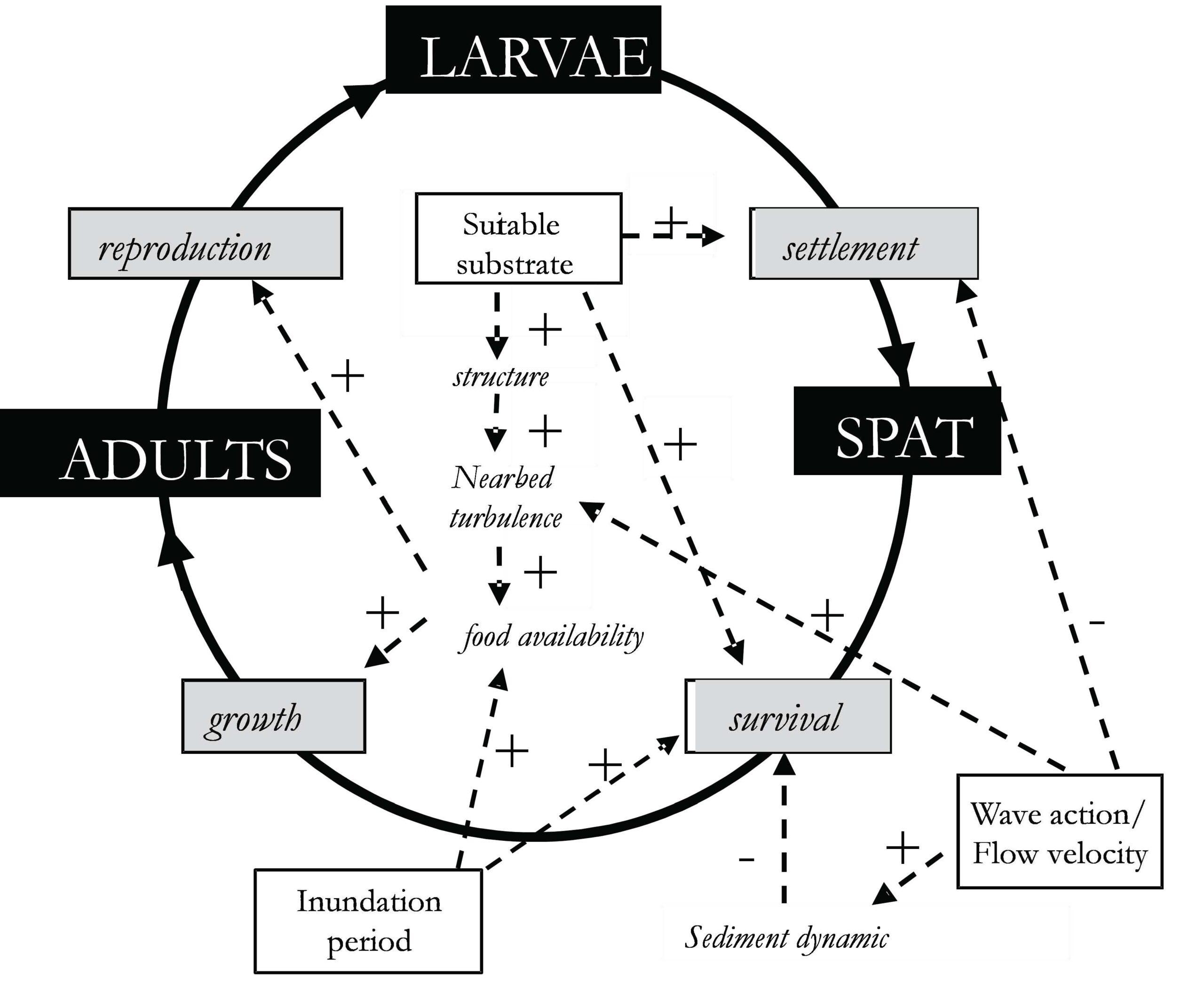 Circular flowchart of abiotic environmental conditions