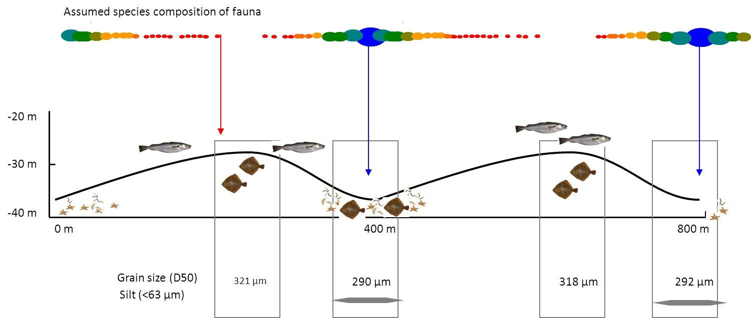 Hypothetical benthic fauna distribution at sand waves.
