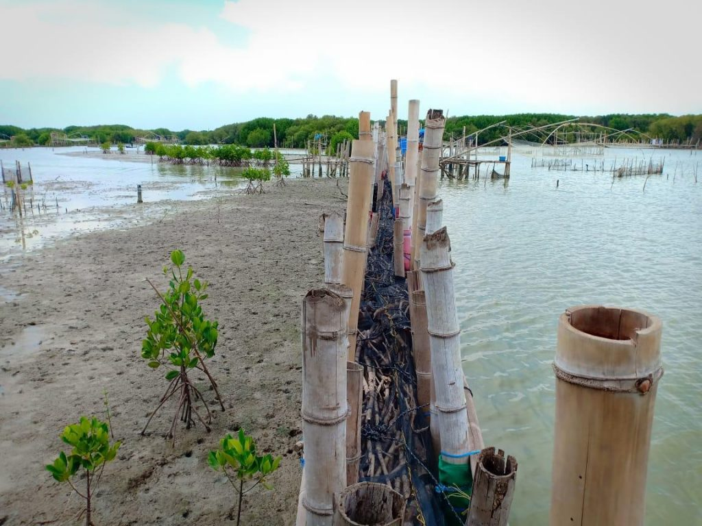 mangrove restoration Demak