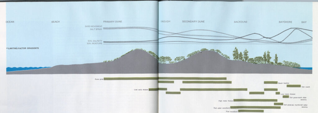 Dune dynamics (Ian L. McHarg Papers, The Architectural Archives, University of Pennsylvania)
